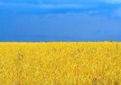 flag_ukrainuy2